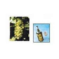 Refroidisseur de bouteille de vin blanc VACUVIN